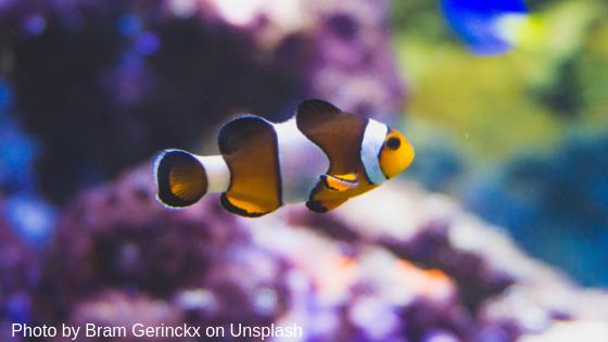 Stress macht abhängig –  was wir von den Clownfischen lernen können